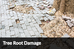 Home Inspection - Tree Root Damage