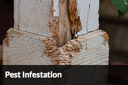 Pest Inspections Blue Mountains